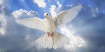 Білий голуб