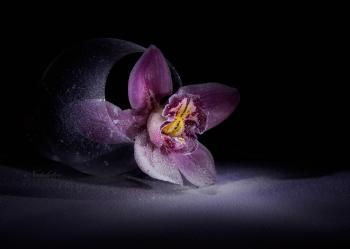 Квітка ночі