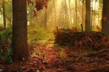 Русокоса осінь