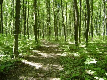 Ліс після людей