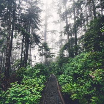 Ліс стоїть неживий