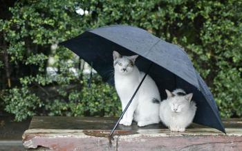 Благодатний дощ