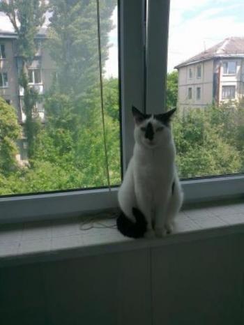 Білий кіт з чорною ознакою