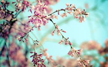 Щасливої весни!
