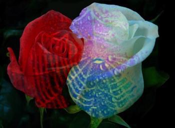 Дві зів'ялі троянди
