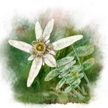 Квітка Любові та Щастя