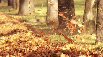 Вітер цілує осінь кохану