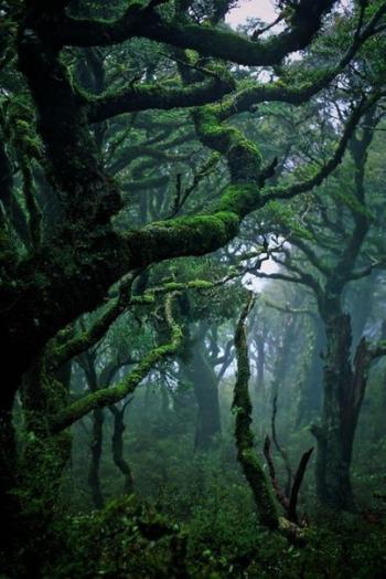 У чорній тіні лісу