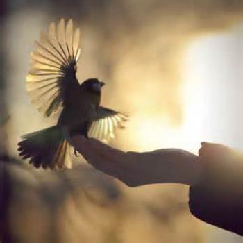 Птахолов