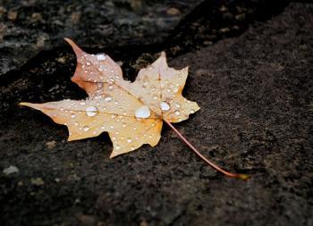 Ми листя