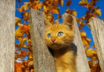 Погляд осені