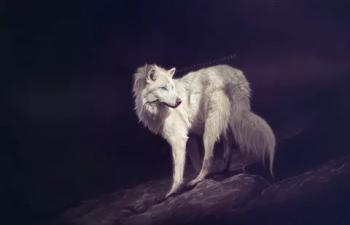 Білий вовк