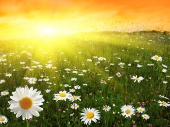 Назустріч сонцю