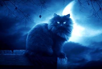 «У травці любо котику лежать…»
