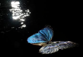 Вмирав метелик