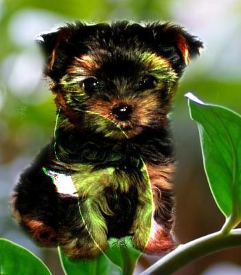 Собачка Муля