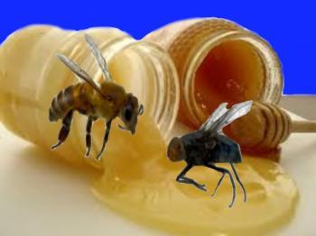 Бджоли,  Мухи та Мед