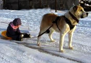 Собачка Хоче Гуляти