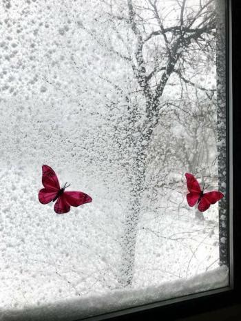 Весна під снігом...