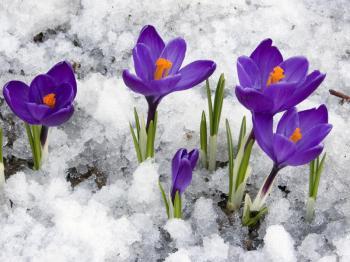 Весняна зима