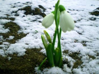 Останні дні зими,  останки снігу