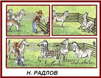 Зебри смугасті