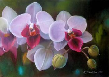 Слёзы орхидей