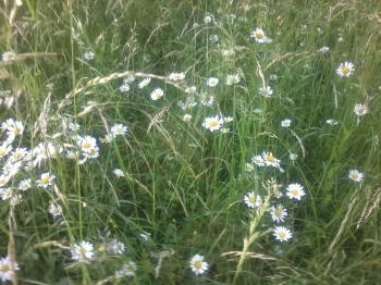 А ті трави,  ті трави такі осяйні...