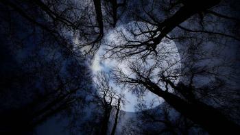 Дерева скрилися з очей