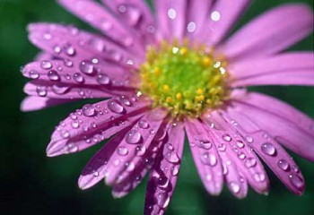 Веселковий дощ