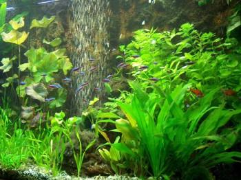Как проводить транспортировку аквариумных растений?