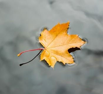 Золотої осені шматочок