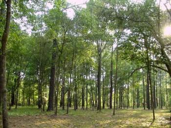 Як поводитися у лісі