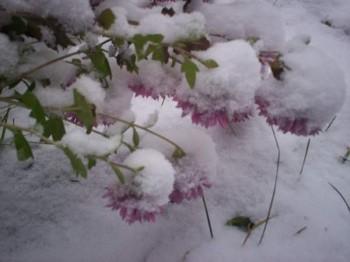Зимові передчуття