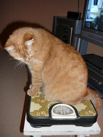 Монолог кота