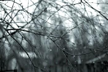 Мокрий світанок