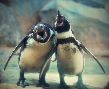 Пісня п'яних пінгвінів