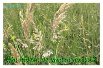 За похилими травами